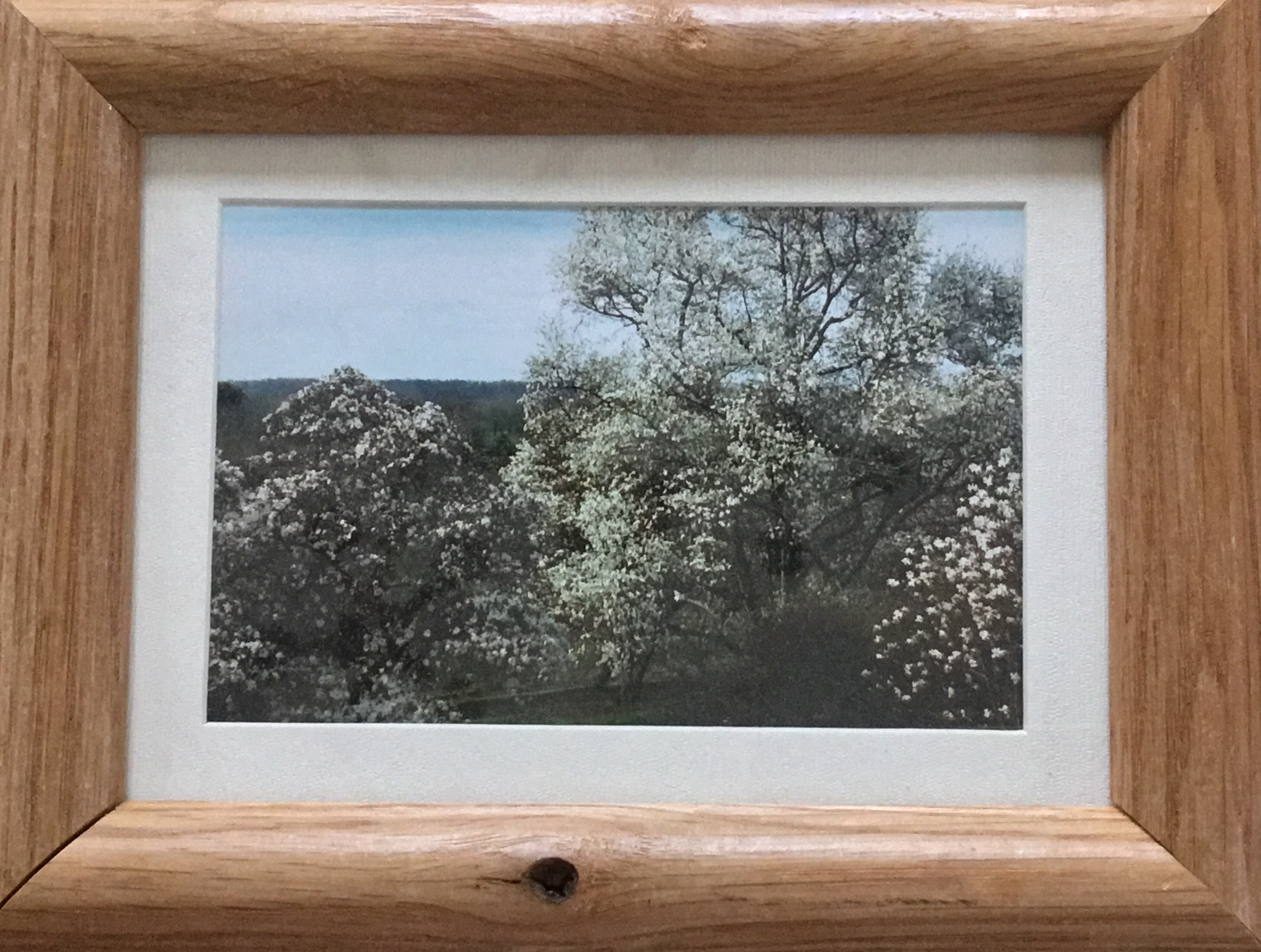 Framed Photograph, Flowering Trees