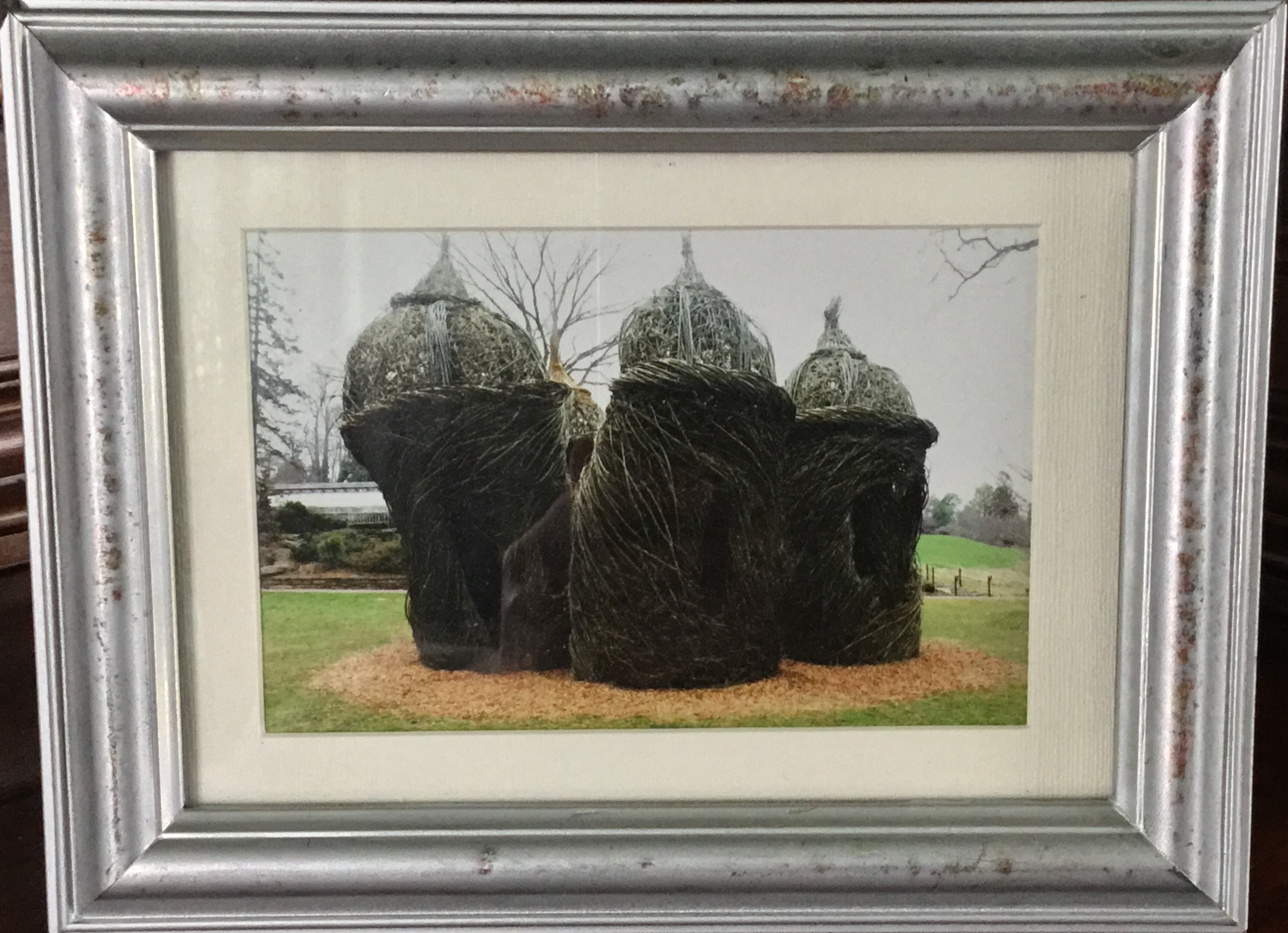 "Framed Photograph, Garden ""Sculpture"""