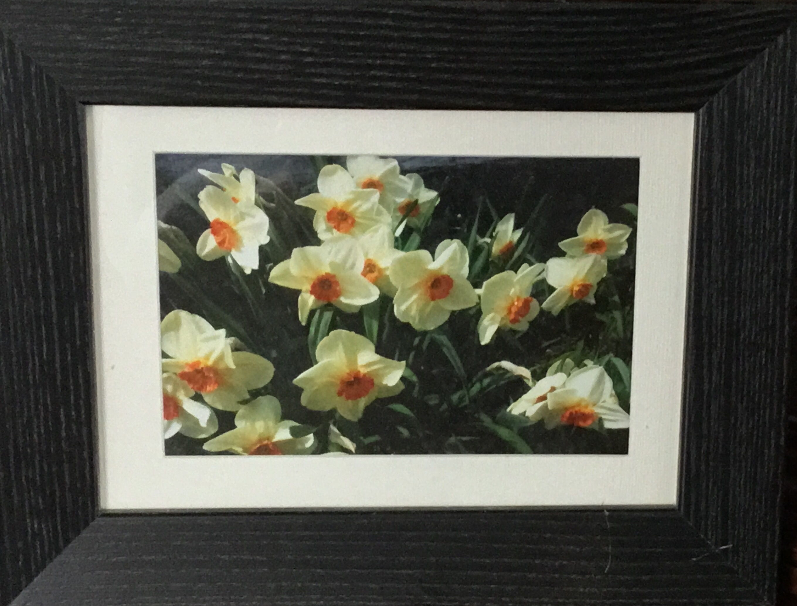 Framed Photograph, Daffodils