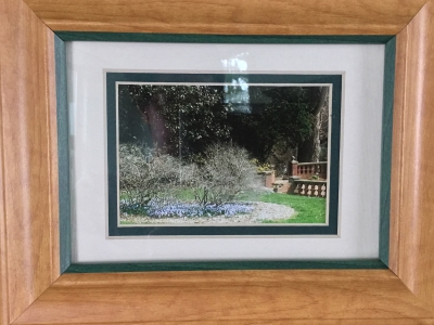 Framed Photograph, Spring Bushes