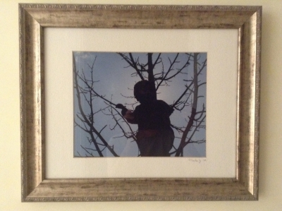 Framed Photograph of Tree Climber
